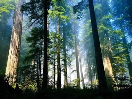 [NEW] Đặc tính của gỗ tự nhiên