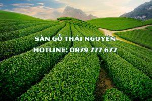Sàn gỗ Thái Nguyên - Hotline: 0979 777 677